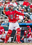 24 February 2019: St. Louis Cardinals catcher Jeremy Martinez in action during a Spring Training game against the Washington Nationals at Roger Dean Stadium in Jupiter, Florida. The Cardinals fell to the Nationals 12-2 in Grapefruit League play. Mandatory Credit: Ed Wolfstein Photo *** RAW (NEF) Image File Available ***