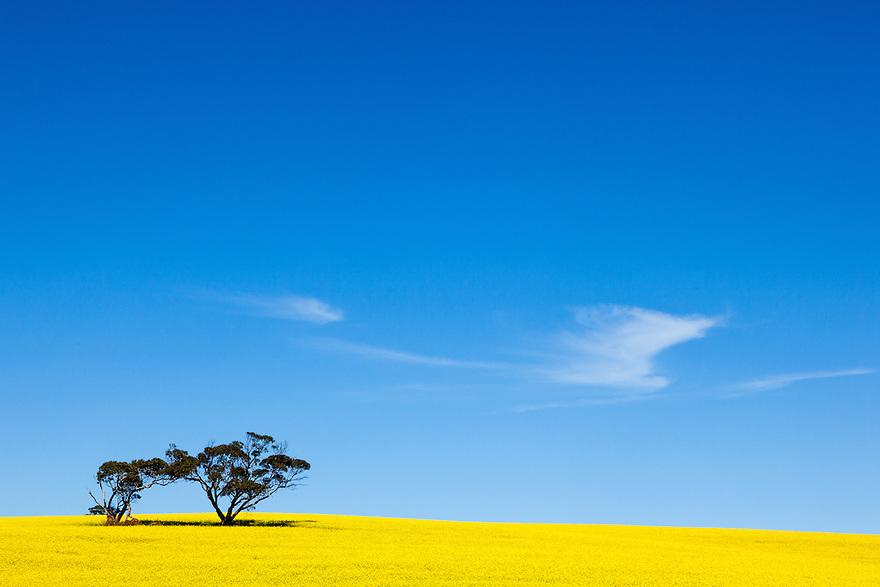 Canola Australia
