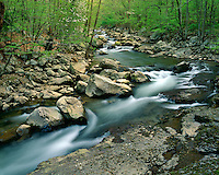 Glade Creek in early spring; New River Gorge National River, WV
