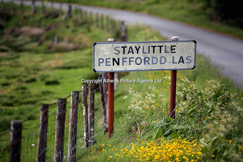 Yellow flowers in front of the village sign of Staylittle (Penffordd-Las in welsh)