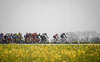 10km into the race<br /> <br /> 81st Gent-Wevelgem 'in Flanders Fields' 2019<br /> One day race (1.UWT) from Deinze to Wevelgem (BEL/251km)<br /> <br /> ©kramon