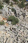 Scree slope weathered carboniferous rock, near Tarbena, Marina Alta, Alicante province, Spain