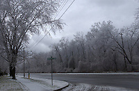 Freezing rain covered trees in Cantara Park. Intersection of Cathcart Blvd., and Christina Street.