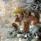 CHIARA,CHRISTMAS ANIMALS, WEIHNACHTEN TIERE, NAVIDAD ANIMALES, paintings+++++,USLGCHI562-2,#XA# ,funny ,funny