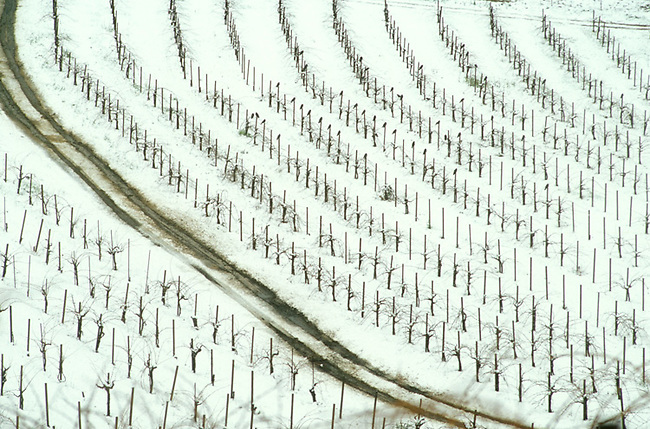 Snow covers vineyard on Spring Mountain