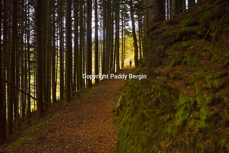 Autumn walk in Trawscoed, Ceredigion, West Wales.<br /> <br /> Stock Photo by Paddy Bergin