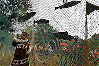 "Salmon is the only freshwater commercial fish in the entire Pacific Rim...Salmon festival for children sponsored by WWF, Wild Salmon Center, UNDP and local NGO's.  4 year old girl on other side of fish net in many photos is:.Anya Cemashkina.  Her family is part of local indigenous community called ""Children of North.""  Her family raises sled dogs.  .."