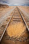 Tumbleweek on the UP railroad, in Nevada's Big Empty