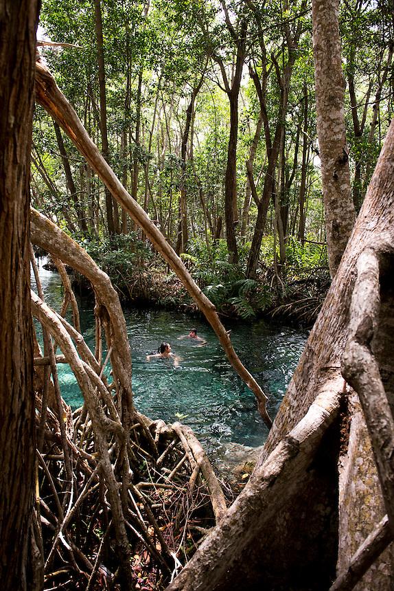 Cenote in a Swamp (manglar) Celestun, Yucatan, Mexico