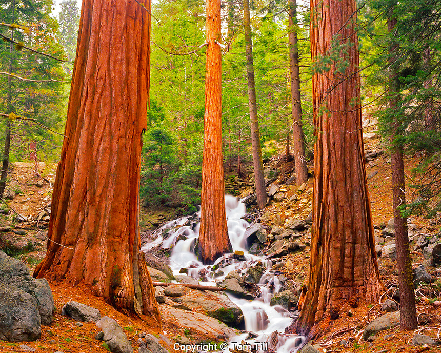 Waterfalls Cascading through Sequoias in Spring Snowmelt, Sequoia National Park, California