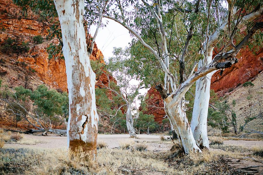 Image Ref: CA686<br /> Location: Uluru, Alice Springs<br /> Date of Shot: 15.09.18
