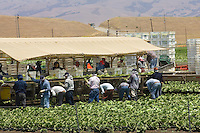Agriculture field workers near Hollister, CA.