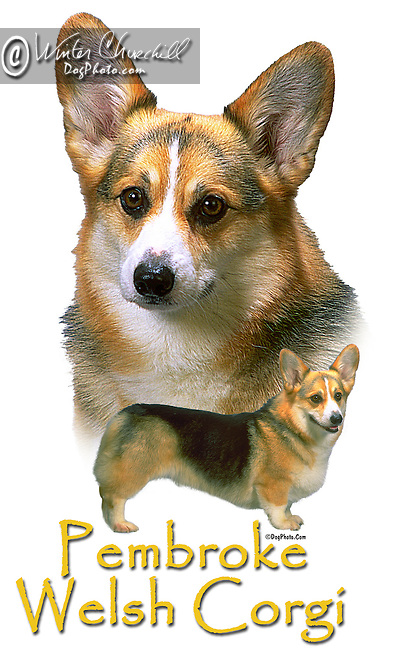 Pembroke Welsh Corgi aka PWC This design is offered on gift merchandise ONLY.<br /> <br /> You'll find all the merchandise options listed IN THE CART so add a design to your shopping cart first. All merchandise item are shipped straight to you from our lab in Dallas, Tx.