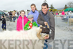 SCOTISH: John Buckley having a tuff time in keeping a hold of his champion Scotish Vlaceface Ram on Sunday at the Kingdom County Fair, at Ballybeggan Racecourse, on Sunday and helping out John Buckley (Toorbona Rathmore) were his children Jack, Katie and Maggie Buckley.