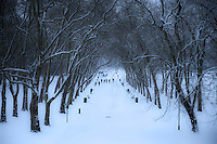 Tree arch over avenue in heavy snow