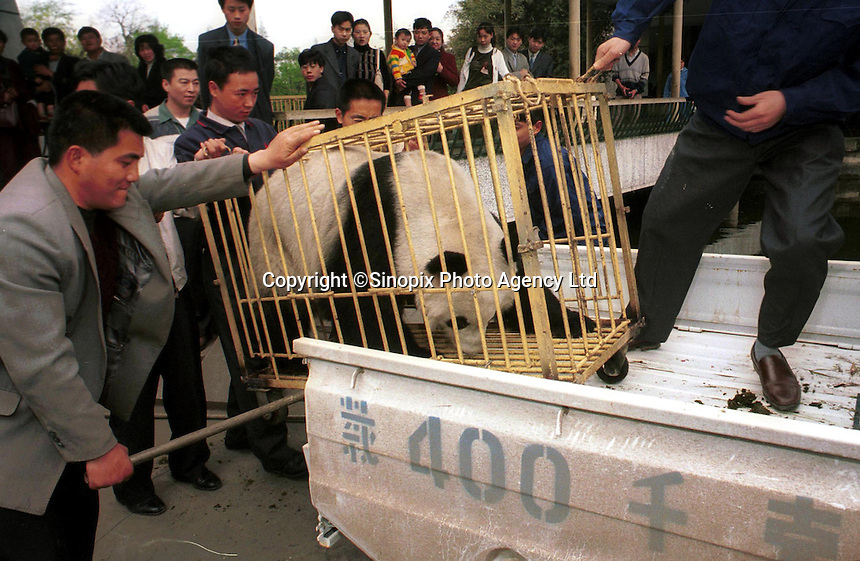 A giant panda arrives from Beijing for Artificial insemination..