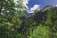 Alpine forests, mountains and blue sky. Hahntennjoch pass, Tyrol, Tirol, Austria.