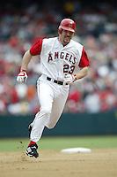 Scott Spiezio of the Los Angeles Angels runs the bases during a 2002 MLB season game at Angel Stadium, in Anaheim, California. (Larry Goren/Four Seam Images)