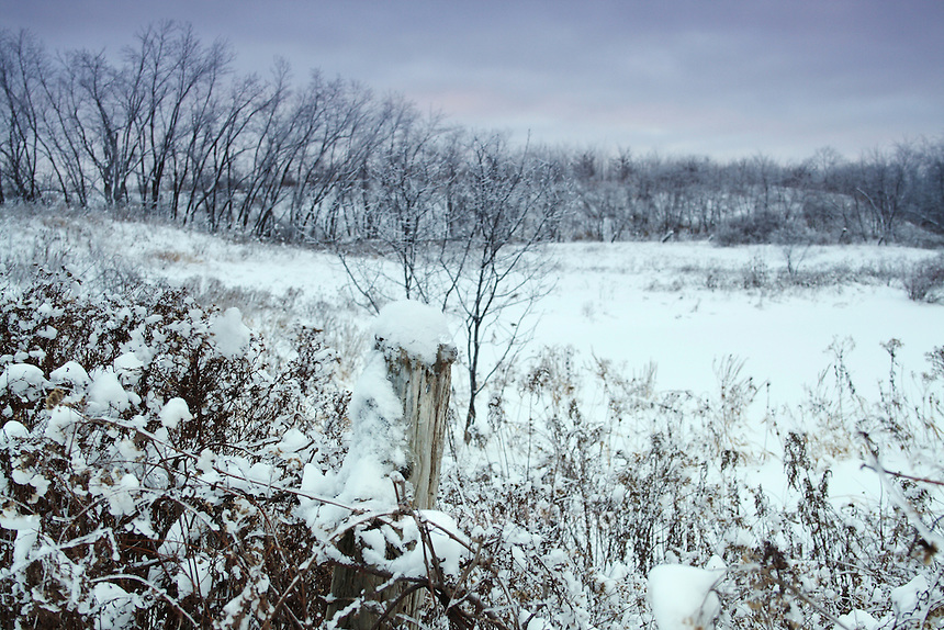 Fence in Snowy Field Late Afternoon