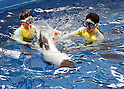 Commerson's piebald dolphins at Hakkeijima Sea Paradise