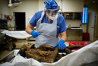 Assistant Krystal Poulin (cq, left) prepares the corpse of a presumed migrant found on the Tohono O'odham reservation near Cockleburr Village on August 2,2009 for an autopsy examination at the Pima County Medical Examiners office in Tucson, Arizona, Wednesday, August 5, 2009. The person is thought to be a man and an identification card was found 30 feet from the body which might be his. ..PHOTOS/ MATT NAGER