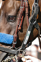 Game On Dude in the paddock for the Pacific Classic at Del Mar Race Course in Del Mar, California on August 26, 2012.