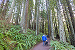 Hoyt Arboretum, part of Forest Park, in Portland, Oregon