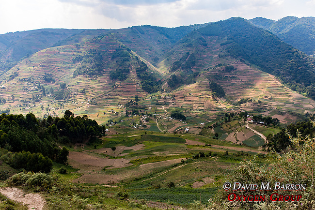 Cultivated Mountainside