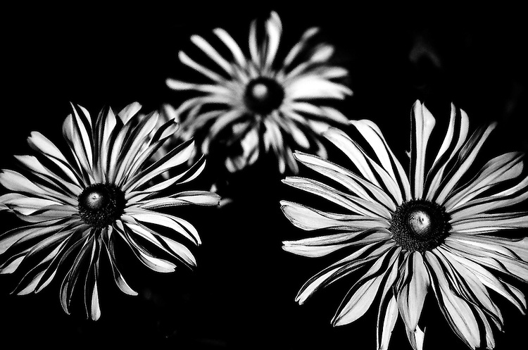 Flowers, 35mm image on Ilford Delta film
