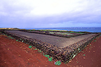 Kamehameha's birthplace, north Kohala