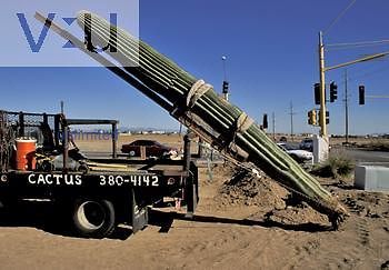 Moving a Saguaro Cactus for landscaping, Arizona, USA.