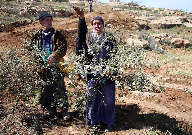 A Palestinian woman weeps as she holds branches of an olive tree after her grove was leveled by Israeli soldiers in the village of Yatta, south of the West Bank city of Hebron 22 February 2011. The grove was situated in the so-called Area C, a closed military zone where Israel exercises full control. Photo by Najeh Hashlamoun