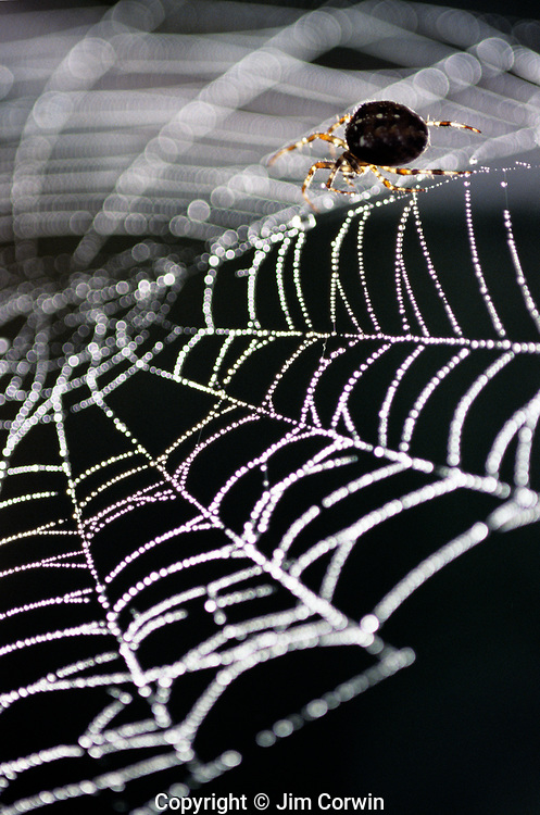 Spiders in Webs