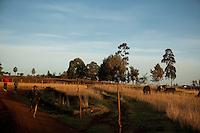 Runner training in Iten, Kenya