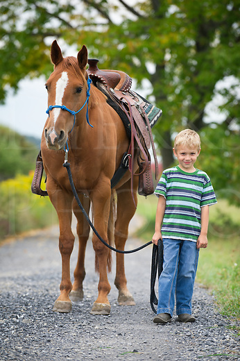Image result for leading a horse