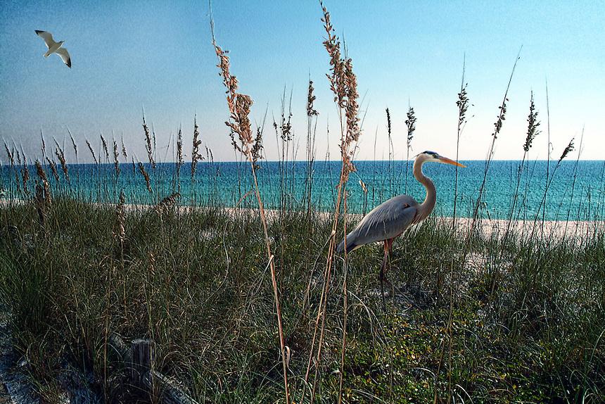 Blue Heron on beach