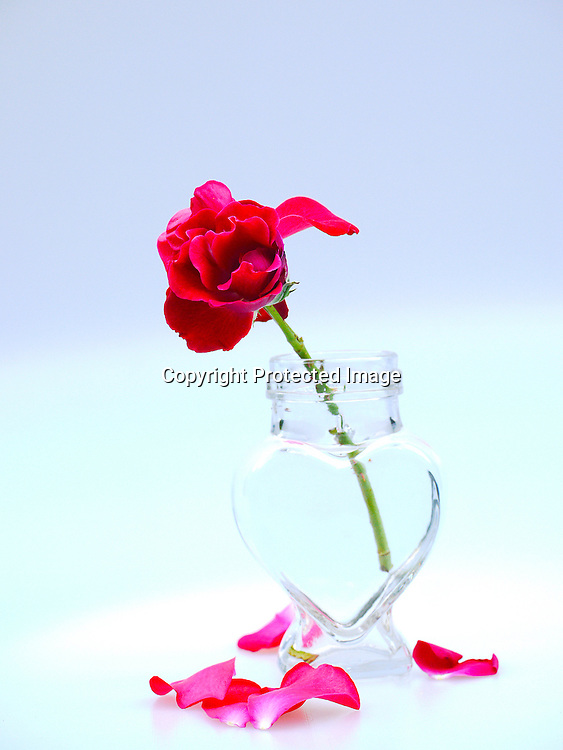 Red Rose In Heart Shaped Vase Paddy Bergin Stock Photos