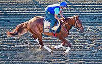 BALTIMORE, MD - MAY 17:  Gunnevera exercises in preparation for the Preakness Stakes this Saturday at Pimlico Race Course on May 17, 2017 in Baltimore, Maryland.(Photo by Scott Serio/Eclipse Sportswire/Getty Images)