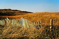 Weathered snow fence and autumn dune grass, Cape Cod