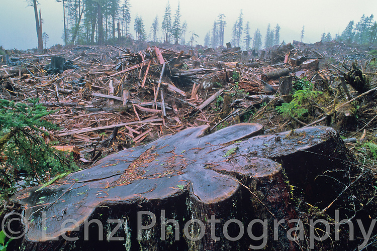 Subject:..Clearcut, old growth, temperate rainforest from the Walbran Valley on Vancouver Island. The logging was done by Weyerhaeuser corporation under Canadian Standards Association (CSA) certification requirements..                                        Background:..On a cold and very wet March day on the west coast of Vancouver Island, I came upon this scene in the Walbran Valley. Once an intact forest ecosystem and one of the last large watersheds of old growth forest, sadly, this valley has become increasingly fragmented with scenes such as this. By positioning a large stump in the foreground, I have tried to convey a sense of the size of the original forest and the impact of the destruction...Camera Specifications:..Nikon F3.Nikkor 20mm ais lens.Velvia 50.Shutter:  1 second  f stop:  f22              OTher Information        ..Gitzo tripod and Manfrotto Proball 468.Mirror locked up and cable release used.                                                      Additional Information:..The image was scanned on a Nikon 9000 at full resolution with no sharpening or other processing incorporated. The resulting file was processed in Lightroom with only basic global adjustments to contrast, brightness, and colour correction applied. No sharpening was applied in either the scanning or processing in lightroom. The image was not cropped. No local adjustments, graduated neutral density filters, grain or noise reduction, etc. were applied.