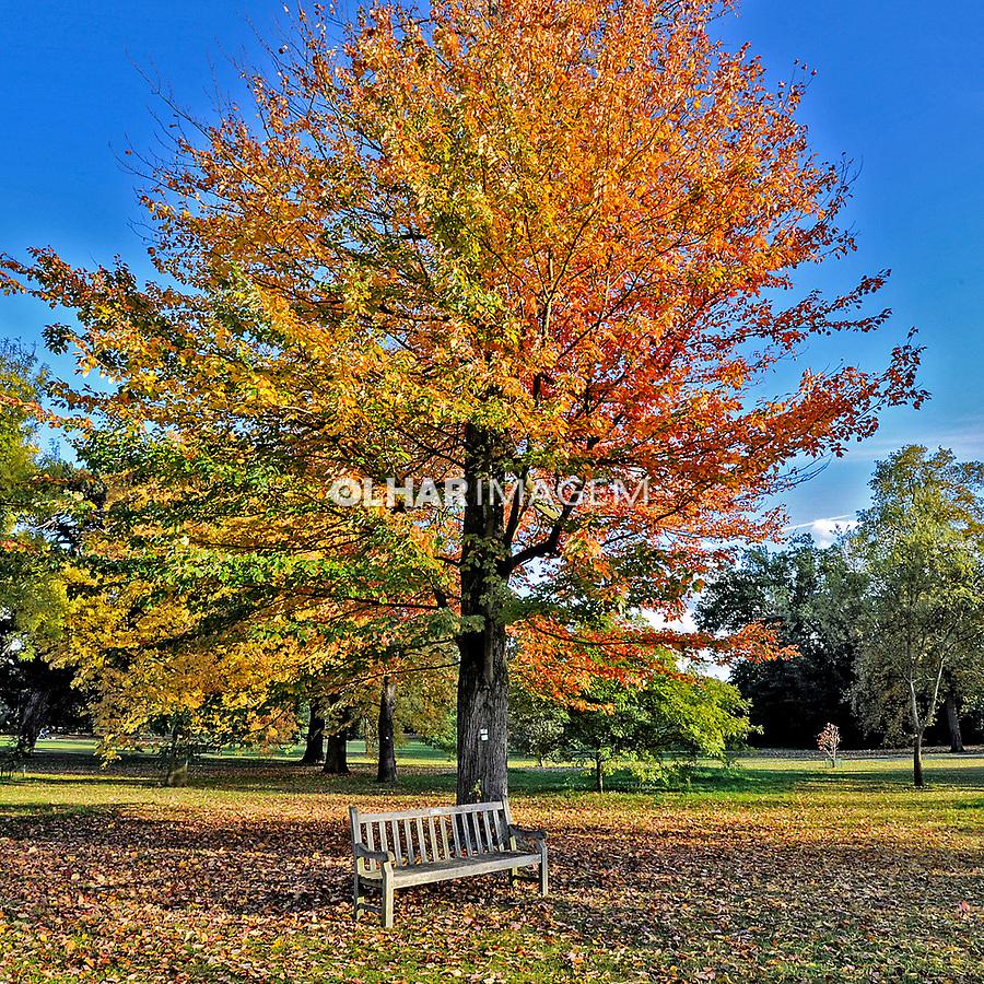 Árvore (Fraxinus amaricana) no parque Jardim Botânico Kew Gardens. Londres. Inglaterra. 2008. Foto de Juca Martins.