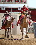 Kody Burrell races against his mom Karla during the 54th International Camel Races in Virginia City, Nev., on Friday, Sept. 6, 2013.  <br /> Photo by Cathleen Allison