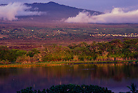 Hawaiian coots paddle across a tranquil pond beneath the slopes of Hualalai