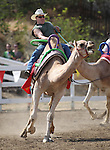 Garrick Jackson rides in the International Camel Races in Virginia City, Nev., on Friday, Sept. 9, 2011. .Photo by Cathleen Allison