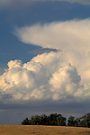 Building puffy white cumulonimbus storm clouds in blue sky over the Central Valley, near Tracy, California.