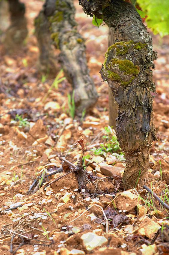 pinot noir old vine sandy gravelly soil ch de corton andre aloxe-corton cote de beaune burgundy france