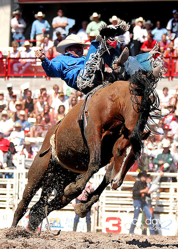 Bareback Riding at Cheyenne Frontier Days Rodeo