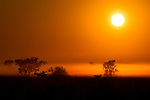 Savanna at sunrise, Kafue National Park, Zambia
