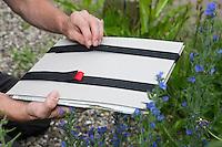 Sammelmappe mit Zeitungen und Spanngurten zum Sammeln und Transportieren von gesammelten Pflanzen. Botanik, Botanisieren, botany, Herbar, herbaria, Herbarien, herbarisieren, herbier, Pflanzenbestimmung, Pflanzenherbar