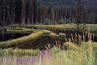 Manning Provincial Park, Southwestern BC, British Columbia, Canada - Beaver Pond